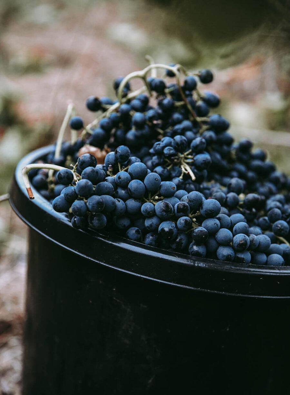 Buy Cabernet Sauvignon Wine online